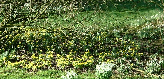 Spring flowers in  Cornhills Farmhouse garden.